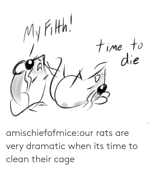 Tumblr, Blog, and Http: My Fith  time to amischiefofmice:our rats are very dramatic when its time to clean their cage