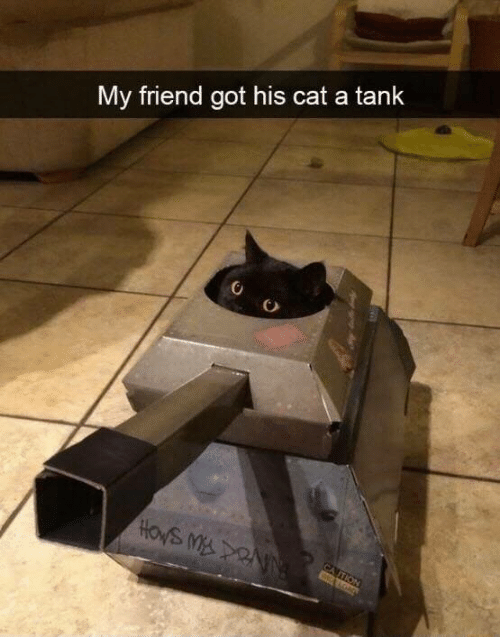 Memes, 🤖, and Got: My friend got his cat a tank  HOWS MDNN  CA TION