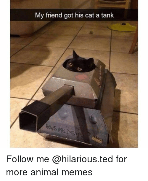 Funny, Memes, and Ted: My friend got his cat a tank  loys Follow me @hilarious.ted for more animal memes