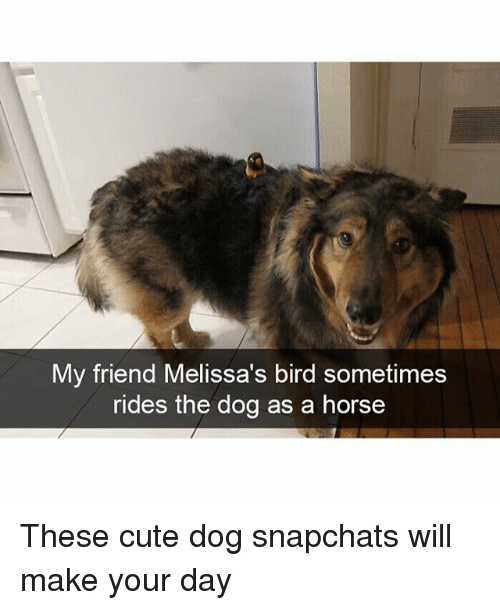 Cute, Funny, and Horse: My friend Melissa's bird sometimes  rides the dog as a horse These cute dog snapchats will make your day
