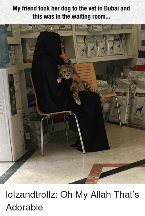 Waiting Room: My friend took her dog to the vet in Dubai and  this was in the waiting room... lolzandtrollz:  Oh My Allah That's Adorable