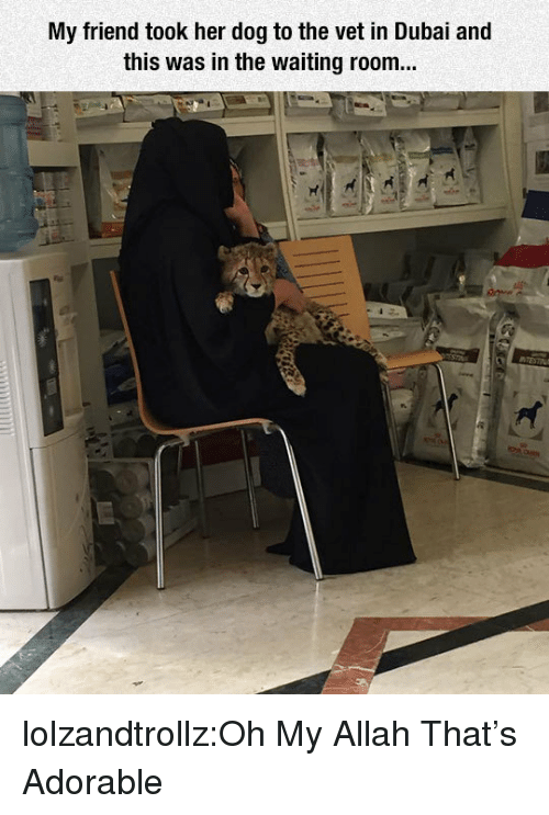 Waiting Room: My friend took her dog to the vet in Dubai and  this was in the waiting room... lolzandtrollz:Oh My Allah That's Adorable