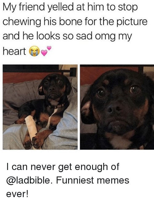Funny, Meme, and Memes: My friend yelled at him to stop  chewing his bone for the picture  and he looks so sad omg my  heart I can never get enough of @ladbible. Funniest memes ever!
