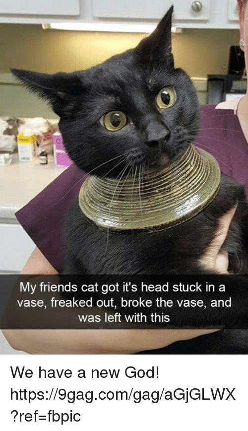 9gag, Dank, and Friends: My friends cat got it's head stuck in a  vase, freaked out, broke the vase, and  was left with this We have a new God! https://9gag.com/gag/aGjGLWX?ref=fbpic