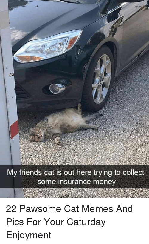 Caturday, Friends, and Memes: My friends cat is out here trying to collect  some insurance money 22 Pawsome Cat Memes And Pics For Your Caturday Enjoyment
