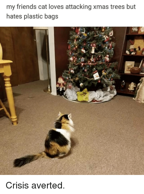 Friends, Memes, and Trees: my friends cat loves attacking xmas trees but  hates plastic bags Crisis averted.