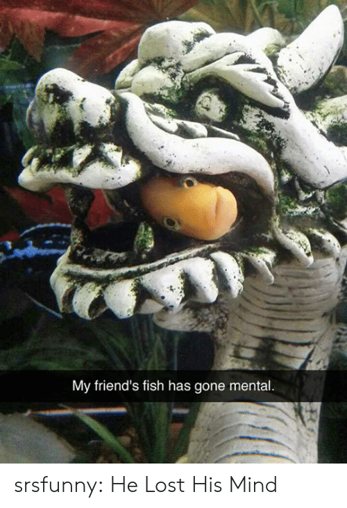 Friends, Tumblr, and Lost: My friend's fish has gone mental. srsfunny:  He Lost His Mind