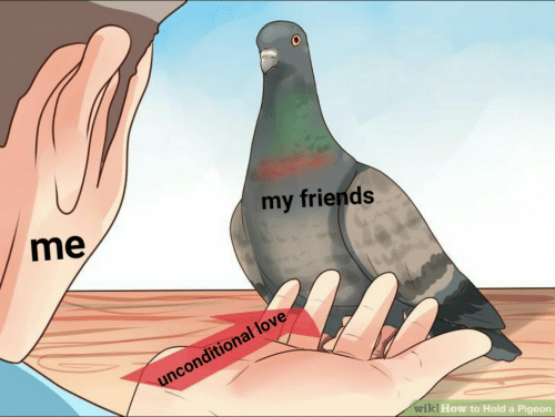 Friends, Love, and How To: my friends  me  unconditional love  wiki How to Hold a Pigeon