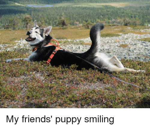 Friends, Puppy, and Smiling: My friends' puppy smiling