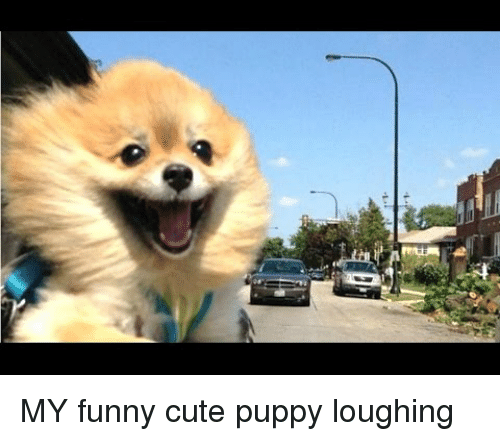 Cute, Funny, and Puppy