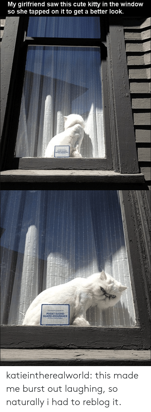 Cute, Saw, and Tumblr: My girlfriend saw this cute kitty in the window  so she tapped on it to get a better look.   PUGET SOUND  GUARD ASSURANCE katieintherealworld:  this made me burst out laughing, so naturally i had to reblog it.