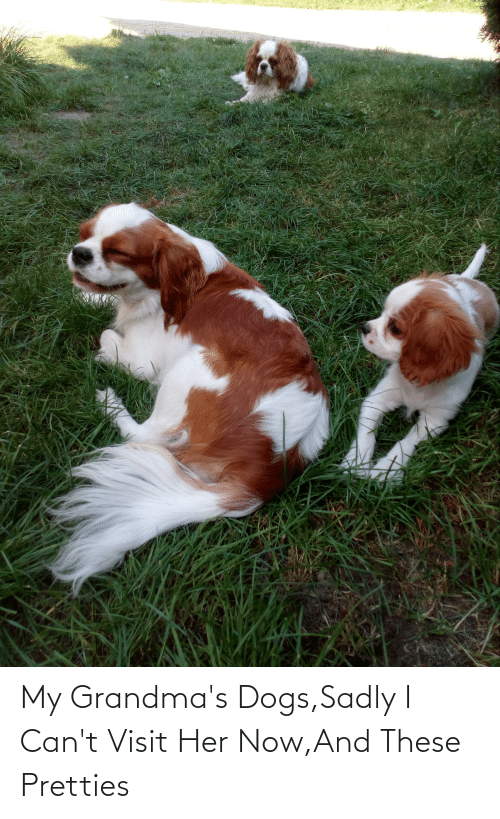 sadly: My Grandma's Dogs,Sadly I Can't Visit Her Now,And These Pretties