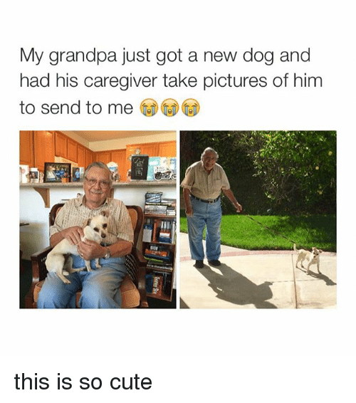 Cute, Dogs, and Grandpa: My grandpa just got a new dog and  had his caregiver take pictures of him  to send to me this is so cute
