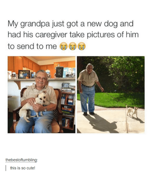 Cute, Dogs, and Grandpa: My grandpa just got a new dog and  had his caregiver take pictures of him  to send to me  thebestof tumbling  this is so cute!