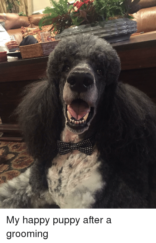 Happy, Puppy, and Grooming