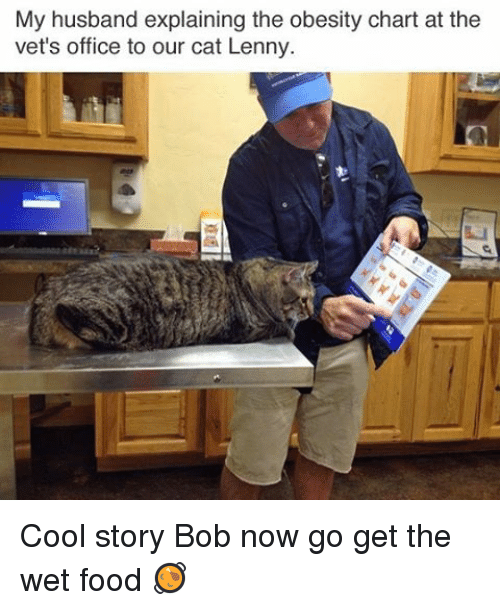 Food, Funny, and Lenny: My husband explaining the obesity chart at the  vet's office to our cat Lenny Cool story Bob now go get the wet food 🥘