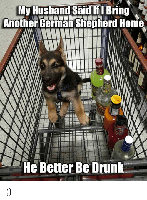 Drunk, Memes, and Home: My Husband Said IfI Bring  Another German Sheptherd Home  He Better Be Drunk ;)