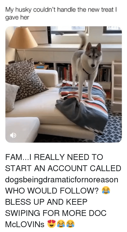 Bless Up, Fam, and Memes: My husky couldn't handle the new treat l  gave her FAM...I REALLY NEED TO START AN ACCOUNT CALLED dogsbeingdramaticfornoreason WHO WOULD FOLLOW? 😂 BLESS UP AND KEEP SWIPING FOR MORE DOC McLOVINs 😍😂😂