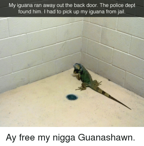 Jail, My Nigga, and Police: My iguana ran away out the back door. The police dept  found him. I had to pick up my iguana from jail. <p>Ay free my nigga Guanashawn.</p>