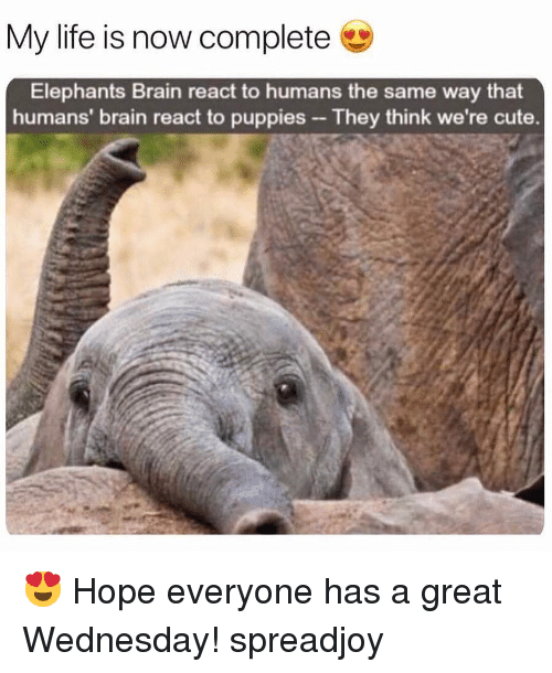 Cute, Life, and Memes: My life is now complete  Elephants Brain react to humans the same way that  humans' brain react to puppies-They think we're cute. 😍 Hope everyone has a great Wednesday! spreadjoy