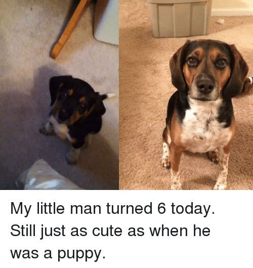 Cute, Puppy, and Today
