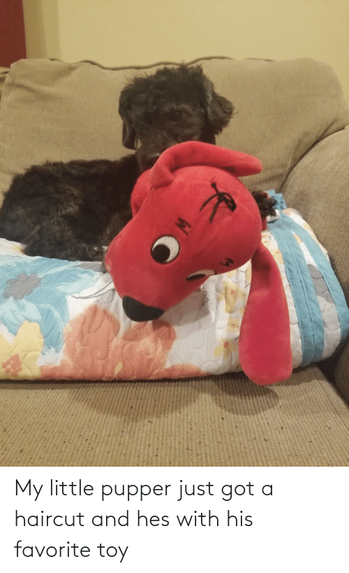 toy: My little pupper just got a haircut and hes with his favorite toy