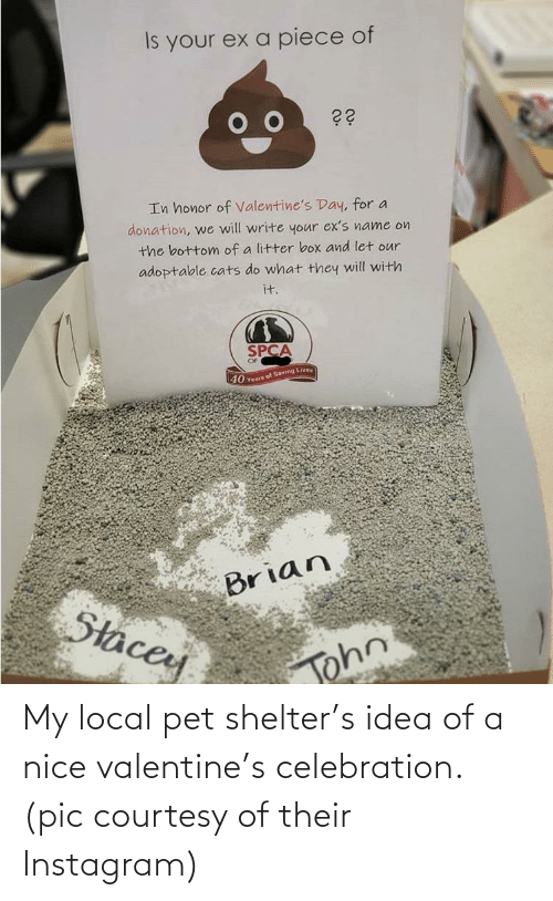 Nice: My local pet shelter's idea of a nice valentine's celebration. (pic courtesy of their Instagram)