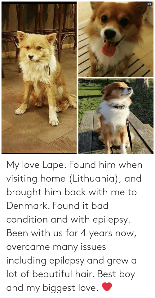 Lithuania: My love Lape. Found him when visiting home (Lithuania), and brought him back with me to Denmark. Found it bad condition and with epilepsy. Been with us for 4 years now, overcame many issues including epilepsy and grew a lot of beautiful hair. Best boy and my biggest love. ❤️