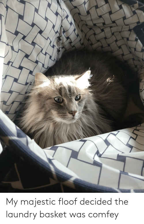 Laundry: My majestic floof decided the laundry basket was comfey