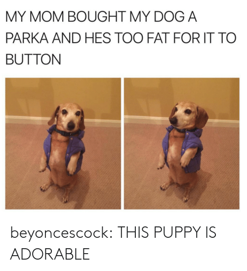 Tumblr, Blog, and Http: MY MOM BOUGHT MY DOG A  PARKA AND HES TOO FAT FOR IT TO  BUTTON beyoncescock: THIS PUPPY IS ADORABLE
