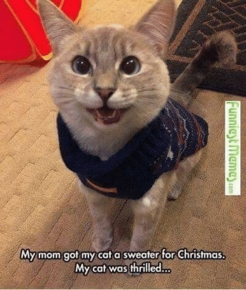 Christmas, Mom, and Got: My mom got my cat a sweater for Christmas  My cat was thrilled