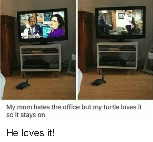The Office, Office, and Turtle: My mom hates the office but my turtle loves it  so it stays on He loves it!