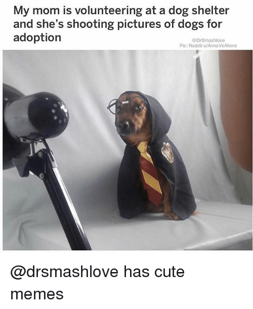 cute memes: My mom is volunteering at a dog shelter  and she's shooting pictures of dogs for  adoption  DrSmashlove  Pic: Reddit u/AnnaVsAliens @drsmashlove has cute memes
