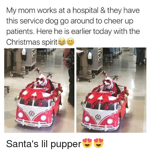 Christmas, Funny, and Hospital: My mom works at a hospital & they have  this service dog go around to cheer up  patients. Here he is earlier today with the  Christmas spirit Santa's lil pupper😍😍