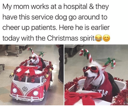 Christmas, Hospital, and Spirit: My mom works at a hospital & they  have this service dog go around to  cheer up patients. Here he is earlier  today with the Christmas spirit