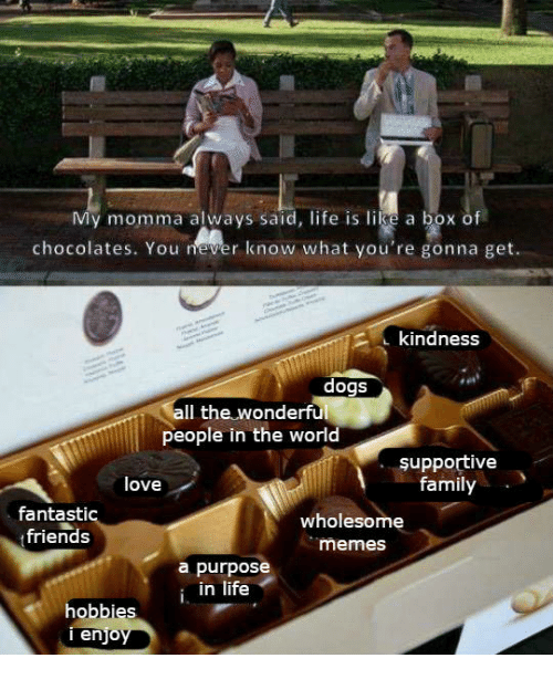 Dogs, Family, and Friends: My momma always said, life is like a box of  chocolates. You never know what you're gonna get.  kindness  dogs  Il the wonderful  people in the world  supportive  family  love  fantastic  friends  wholesome  memes  a purpose  i in life  hobbies  enjo