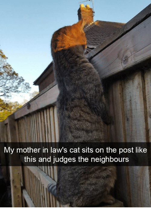 in laws: My mother in law's cat sits on the post like  this and judges the neighbours