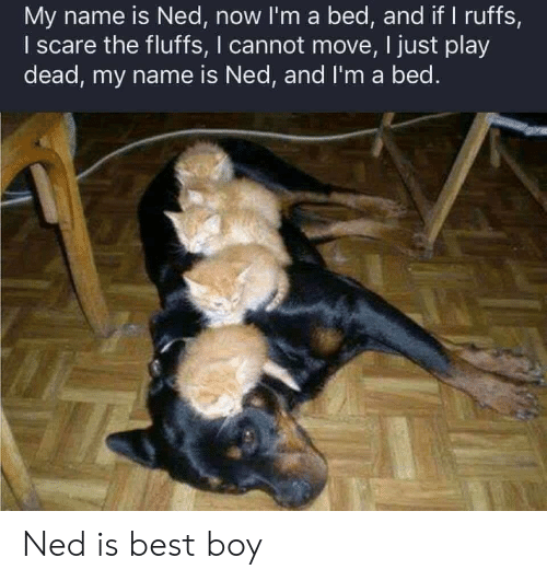 Scare, Best, and Boy: My name is Ned, now I'm a bed, and if I ruffs,  I scare the fluffs, I cannot move, I just play  dead, my name is Ned, and I'm a bed. Ned is best boy
