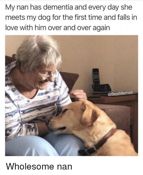 Love, Dementia, and Time: My nan has dementia and every day she  meets my dog for the first time and falls in  love with him over and over again  @BestMemes Wholesome nan