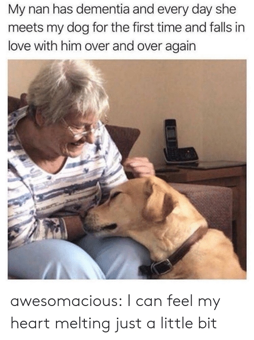 Love, Tumblr, and Blog: My nan has dementia and every day she  meets my dog for the first time and falls in  love with him over and over again awesomacious:  I can feel my heart melting just a little bit