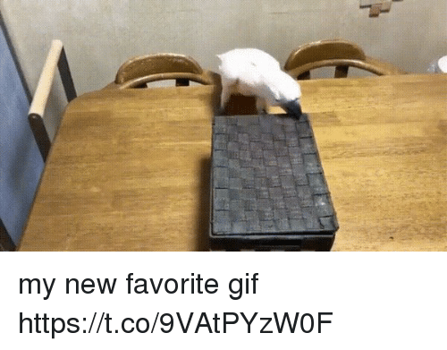 Gif, Girl Memes, and New: my new favorite gif https://t.co/9VAtPYzW0F