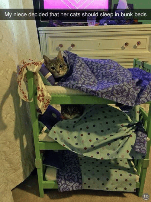 Cats, Bunk Beds, and Sleep: My niece decided that her cats should sleep in bunk beds  to