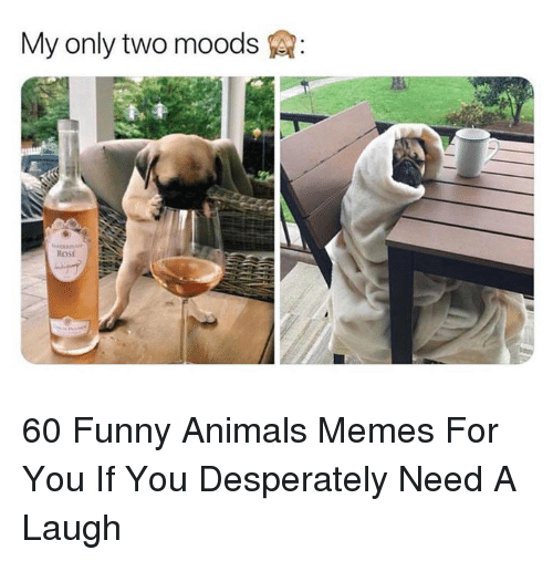 Animals, Funny, and Funny Animals: My only two moods  ROSE 60 Funny Animals Memes For You If You Desperately Need A Laugh