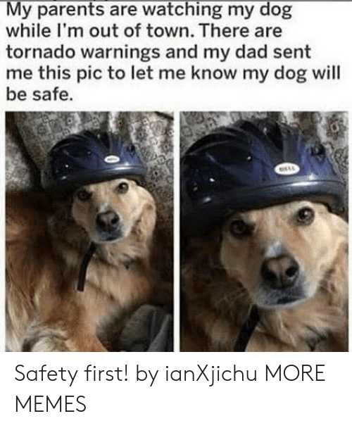 Tornado: My parents are watching my dog  while I'm out of town. There are  tornado warnings and my dad sent  me this pic to let me know my dog will  be safe. Safety first! by ianXjichu MORE MEMES
