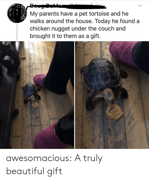 tortoise: My parents have a pet tortoise and he  walks around the house. Today he found  chicken nugget under the couch and  brought it to them as a gift. awesomacious:  A truly beautiful gift