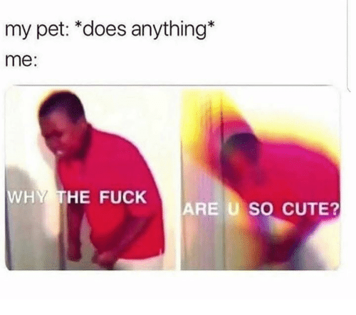 Cute, Dank, and Fuck: my pet: *does anything*  me:  WHY THE FUCK  ARE U SO CUTE?
