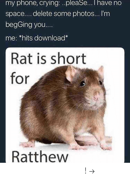 Crying, Phone, and Pinterest: my phone, crying: ..pleaSeI have no  space....delete some photos... I'm  begGing you  me: *hits download  Rat is short  for  Ratthew 𝘍𝘰𝘭𝘭𝘰𝘸 𝘮𝘺 𝘗𝘪𝘯𝘵𝘦𝘳𝘦𝘴𝘵! → 𝘤𝘩𝘦𝘳𝘳𝘺𝘩𝘢𝘪𝘳𝘦𝘥