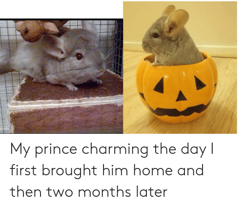 Prince, Home, and Charming: My prince charming the day I first brought him home and then two months later
