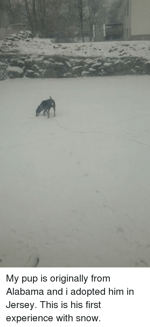Twitch, Alabama, and Snow: My pup is originally from Alabama and i adopted him in Jersey. This is his first experience with snow.
