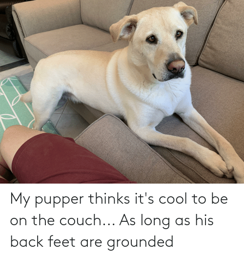 grounded: My pupper thinks it's cool to be on the couch... As long as his back feet are grounded